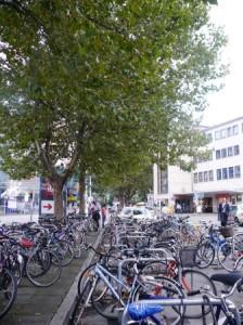 """Diese Bäume stehen u.U. in """"räumlicher Konkurrenz"""" zur geplanten neuen Bushaltestelle."""